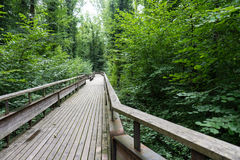 Mystic wood path in forest Stock Photography