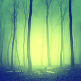 Mystic yellow green forest scene Stock Images