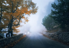 Mystical autumn foggy forest with road. Fall misty woods Royalty Free Stock Image