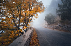 Mystical autumn foggy forest with road. Fall misty woods Stock Images