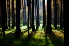 Mystical Autumn Forest. Royalty Free Stock Images