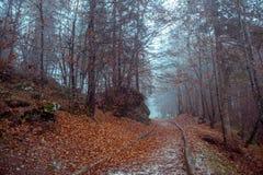 Mystical autumn forest Stock Photos