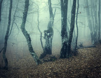 Mystical autumn forest with green fog in the morning Stock Photography