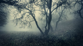 Mystical autumn forest with green fog in the morning Royalty Free Stock Photography