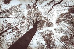 Mystical autumn forest Stock Images