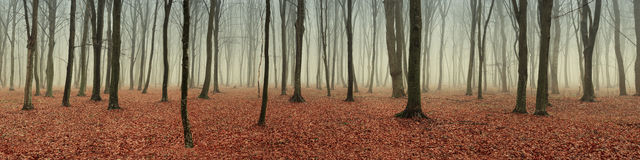 Mystical autumn forest Royalty Free Stock Photography