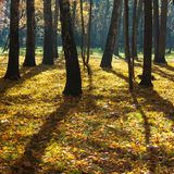 Mystical autumn forest. Sunshine in the foggy mystical autumn forest royalty free stock photo
