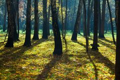 Mystical autumn forest. Sunshine in the foggy mystical autumn forest royalty free stock image