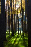 Mystical autumn forest. Sunshine in the foggy mystical autumn forest royalty free stock photography