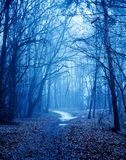 Mystical autumn forest with trail in blue fog. Beautiful landscape with trees, path, fog. Nature background. Foggy forest. Fairy. Forest stock images
