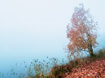 Mystical autumn landscape with fog in the Park. Mystical autumn landscape with fog in the Park stock photography
