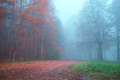 Mystical autumn landscape with fog in the Park. Mystical autumn landscape with fog in the Park royalty free stock photo