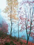 Mystical autumn landscape with fog in the Park. Mystical autumn landscape with fog in the Park royalty free stock images