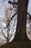 Mystical autumn park sunken fog tree broken branch Stock Photo