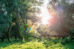 Mystical background of fairies Royalty Free Stock Image