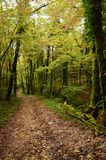 Mystical beautiful mossy forest scenery, France. Mystical beautiful mossy forest scenery with a closeup of trees covered by moss, France royalty free stock photo