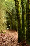 Mystical beautiful mossy forest scenery, France. Mystical beautiful mossy forest scenery with a closeup of trees covered by moss, France stock photography