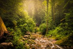 Mystical black forest spiritually landscapes love and peaceful royalty free stock photo
