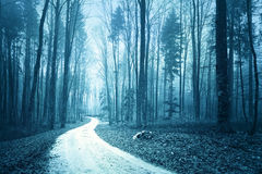 Mystical blue colored foggy forest with road Royalty Free Stock Photo