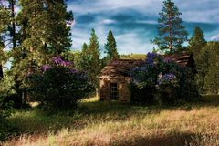 Mystical Cabin With Flowers In Woods Royalty Free Stock Photography