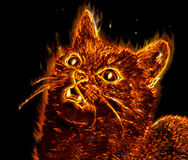 Mystical cat. Mystical flaming cat on black background Stock Images