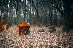 Mystical cemetery in the woods Royalty Free Stock Photo