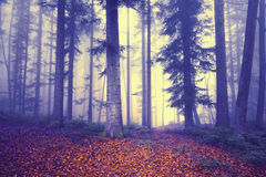 Mystical colored foggy forest fairytale Stock Photos
