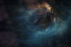 Mystical crow. Stock Photo