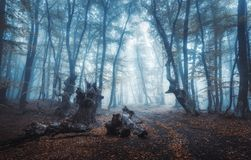 Mystical dark autumn forest with trail in blue fog Royalty Free Stock Image