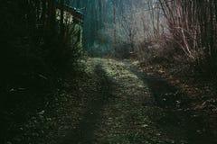 Mystical dark forest road. Mystical road in dark forest Stock Photos