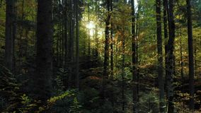 Mystical dark forest wild nature wood tracking