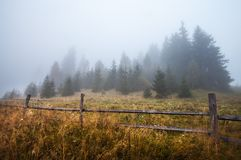 Mystical deep fog in a forest Royalty Free Stock Image