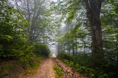 Mystical deep fog in a forest Royalty Free Stock Photography