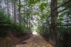 Mystical deep fog in a forest Stock Photos