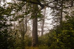 Mystical deep fog in a forest Royalty Free Stock Photos
