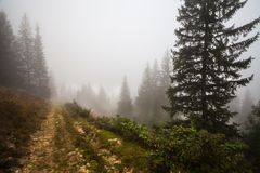 Mystical deep fog in a forest Stock Images