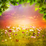 Mystical evening on the meadow. Stock Photography