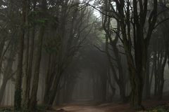 The mystical fog of the Sintra forest. Portugal royalty free stock photo