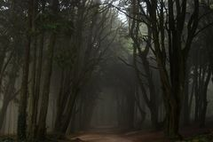 The mystical fog of the Sintra forest. Portugal royalty free stock photography