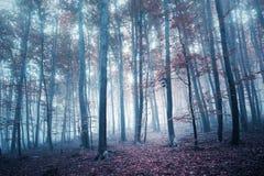 Mystical foggy autumn season forest Royalty Free Stock Image