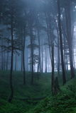 Mystical forest. A foggy, mystical forest royalty free stock images