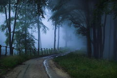 Mystical forest. A foggy, mystical forest royalty free stock photo