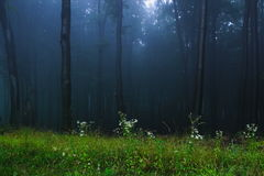 Mystical forest. A foggy, mystical forest stock image