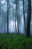 Mystical forest Stock Photos