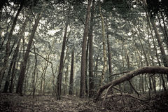 Mystical forest. Wide angle photo view stock photo