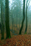 Mystical forest Stock Image