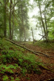 Mystical forest Stock Photography
