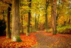 Mystical forest background stock photography