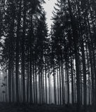 Mystical Forest Stock Photo