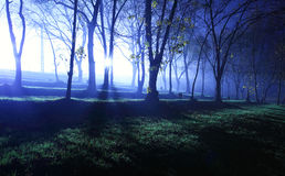 Mystical forest in blue Stock Photography